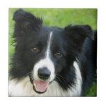 El perro del border collie añade al mascota del te teja