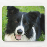El perro del border collie añade al mascota del te tapete de ratones
