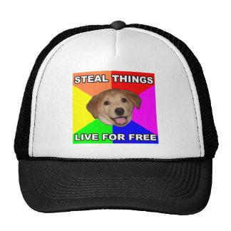 El perro del consejo roba cosas, vive gratis gorro