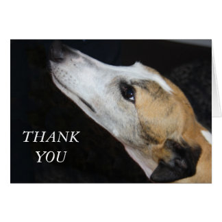 El perro del galgo le agradece cardar felicitacion