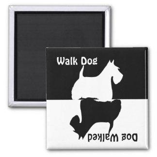 El perro del paseo, perro caminó, imán escocés del