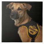 El perro del rescate de Brown con me adopta chalec Teja Ceramica