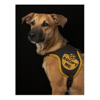 El perro del rescate de Brown con me adopta Tarjeta Postal