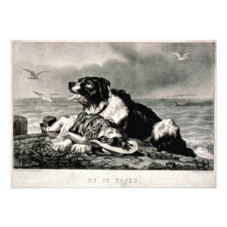 El perro del rescate de Ives lo ahorra curtidor y Fotografía