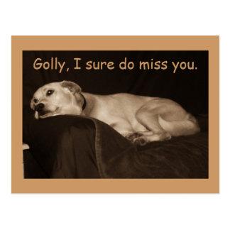 El perro esquimal amarillo Golly I del hoyo del Tarjeta Postal