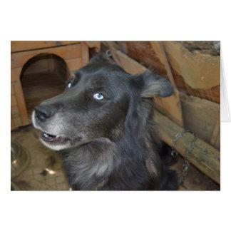 El perro esquimal negro dice fresco tarjeta de felicitación