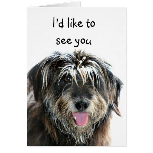 El perro lanudo quiere ver felicitación