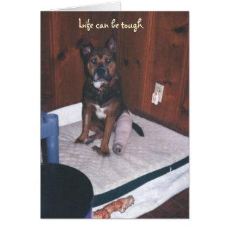 El perro lindo consigue pierna bien/quebrada tarjeta pequeña