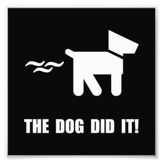 El perro lo hizo cojinete