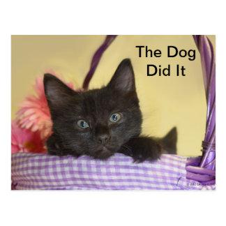 El perro lo hizo postales