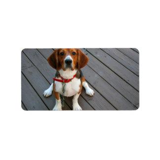 El perro más lindo del beagle nunca etiqueta de dirección