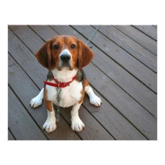 """El perro más lindo del beagle nunca folleto 8.5"""" x 11"""""""