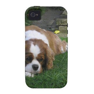 El perro más lindo en el mundo tiene hambre Case-Mate iPhone 4 fundas