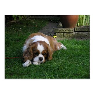 El perro más lindo en el mundo tiene hambre postales