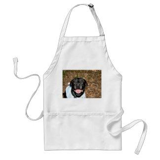 El perro negro feliz de la mezcla del laboratorio  delantal