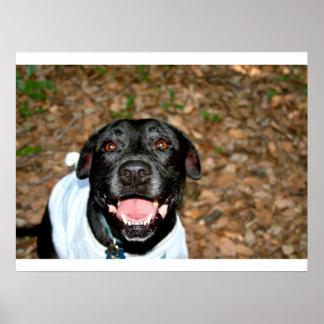 El perro negro feliz de la mezcla del laboratorio  poster