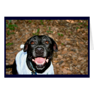 El perro negro feliz de la mezcla del laboratorio tarjeta de felicitación