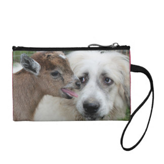El perro resuelve el embrague de la moneda de la