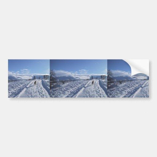El perro solitario camina encima de un camino neva pegatina de parachoque