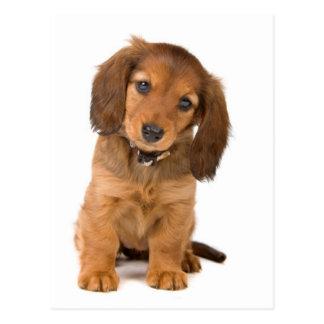 el perro postal