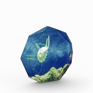 el personalizado de los pescados de las medusas