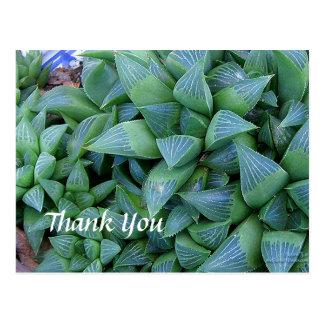 El personalizado le agradece postal de las plantas