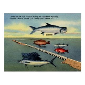 El pescado del vintage de la Florida cierra la Tarjetas Postales