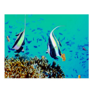 El pescado en Fiji riega la postal