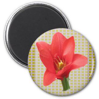 El pétalo rojo exótico del tulipán basó los iman de frigorífico