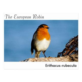 El petirrojo europeo tarjeta postal