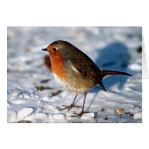 El petirrojo rojo en la tarjeta de la nieve