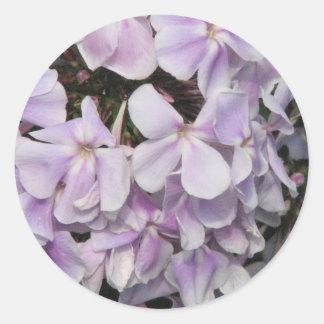 El Phlox florece al pegatina