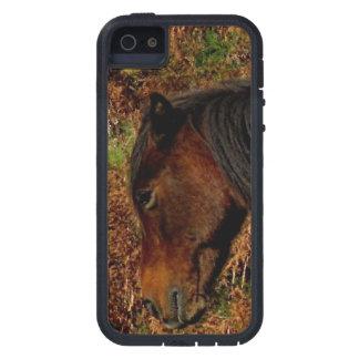 El picar del potro de Dartmoor iPhone 5 Funda