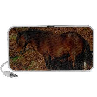El picar del potro de Dartmoor Laptop Altavoz