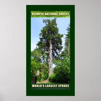 El Picea-Poster más grande de los N-F-Mundos olímp