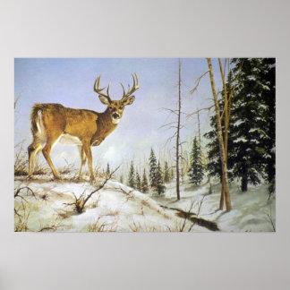 El pico de Jay, ciervo de la cola blanca Poster