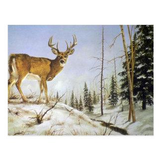 El pico de Jay, ciervo de la cola blanca Tarjetas Postales