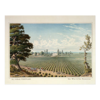 El Pinal Vineyard, San Joaquin County Postcard