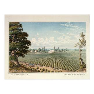 El Pinal Vineyard, San Joaquin County Postcard