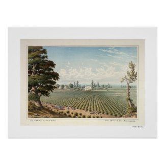El Pinal Vineyard, San Joaquin County Poster