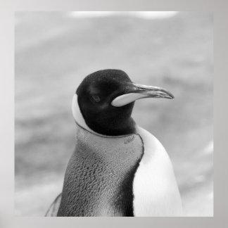 """""""El pingüino de emperador """" Póster"""