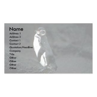El pingüino de las Islas Galápagos en roca de la l Tarjeta De Visita