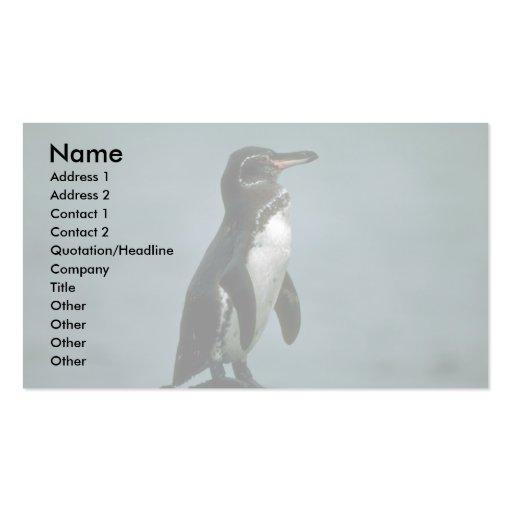 El pingüino de las Islas Galápagos en roca de la l Tarjetas De Visita