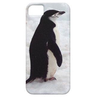El pingüino más lindo, nunca funda para iPhone SE/5/5s