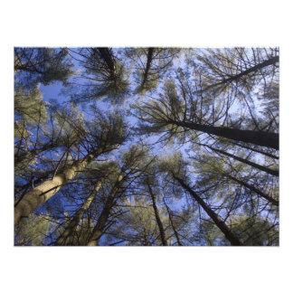 El pino Barrens - NJ escénico Arte Con Fotos