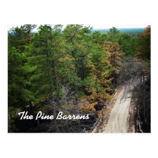 El pino Barrens Postales