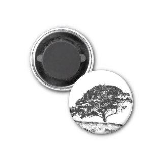 El pino de Bonaventure Imán Redondo 3 Cm
