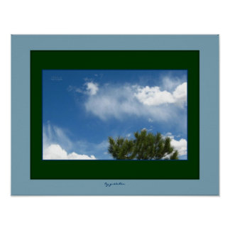 El pino ponderosa en poster de las nubes 2 cerca g