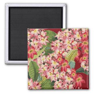 El Plumeria florece el imán botánico floral