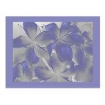 El Plumeria sombrea la postal azul y gris
